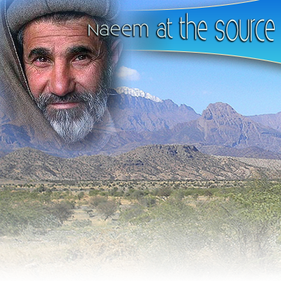 Naeem at the Source
