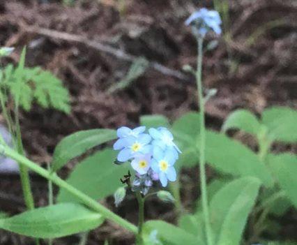 AO-flowers1