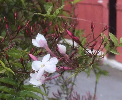 AO-flowers2