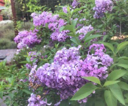 AO-flowers3
