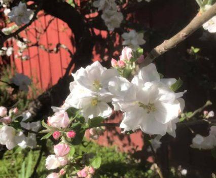 AO-flowers4